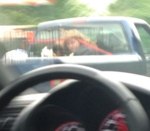 Picture posted by Reddit user, of girl riding in back of truck in dog cage, along with her dog. Photo via Reddit.